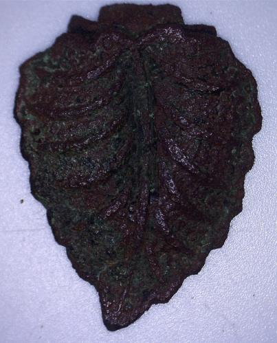 Date: ?Type: LeafFound by: Tom Connell